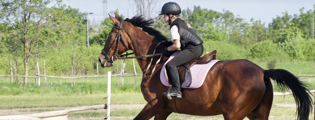 school combineren met paardrijden