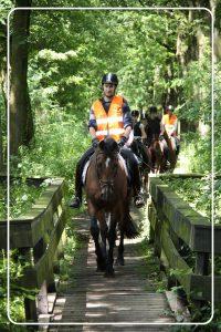 Buitenritten-paardrijden