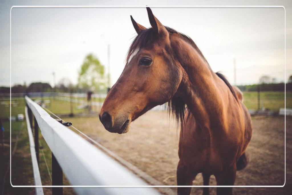tips bij het kopen van een paard