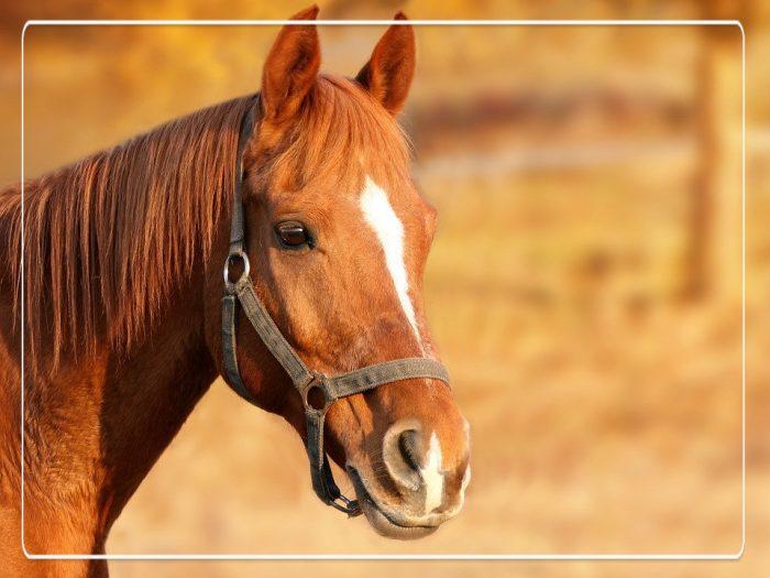 tips voor het kopen van een paard