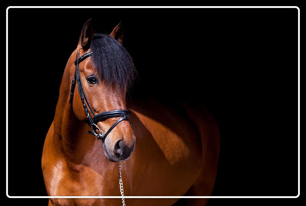 paardenfotografie-tips