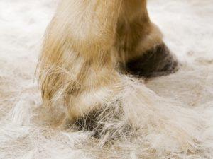 paard helpen verharen