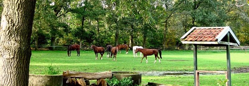 Weidegang paard