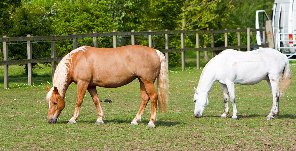 weidegang paarden