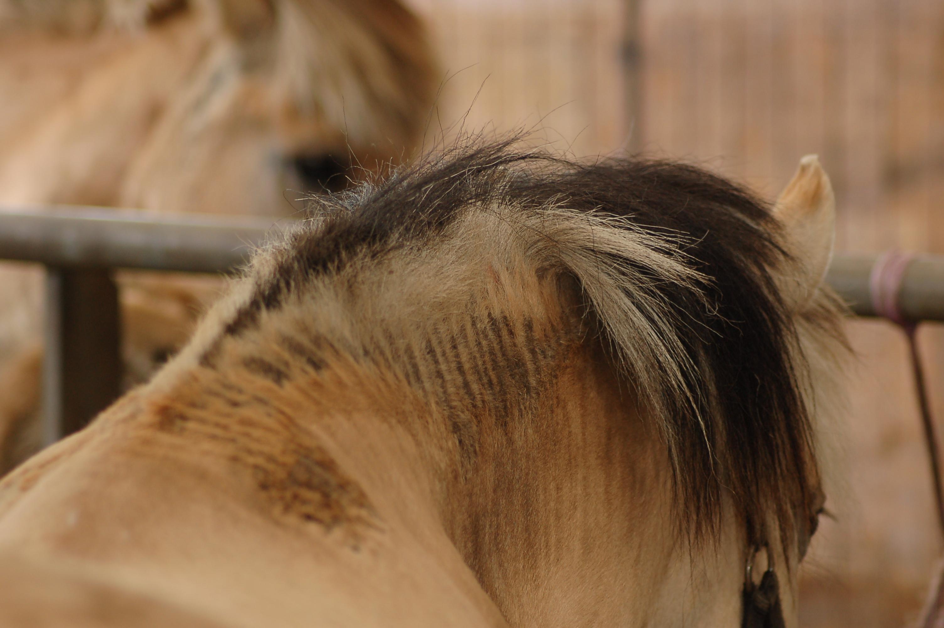 Zomereczeem paard