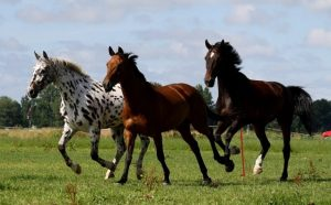 zomer tips paard