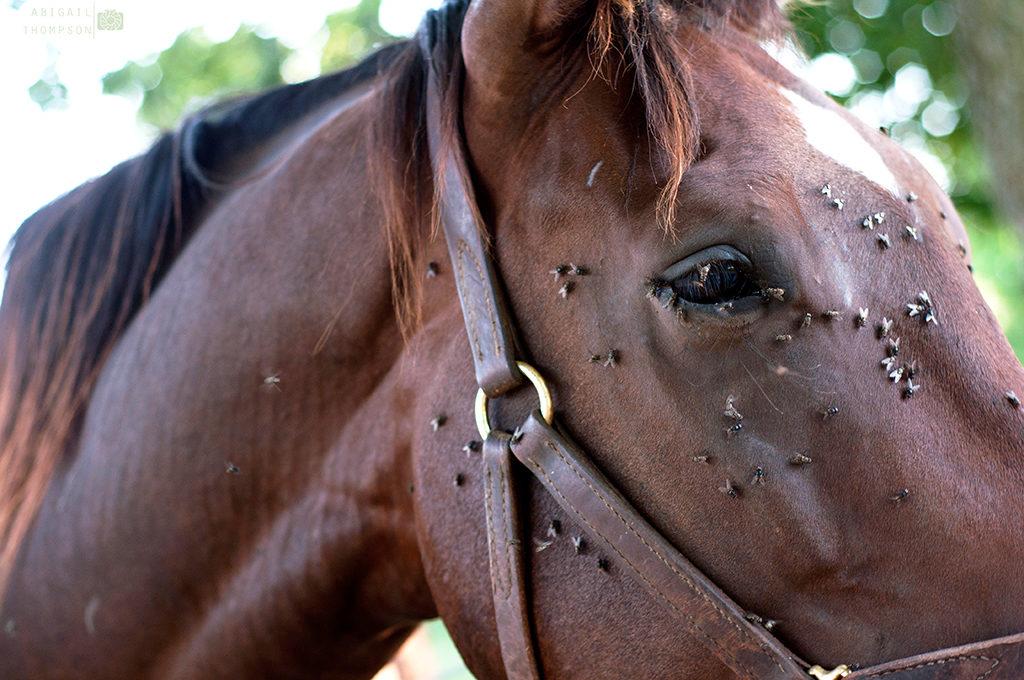 last van vliegen rondom je paard