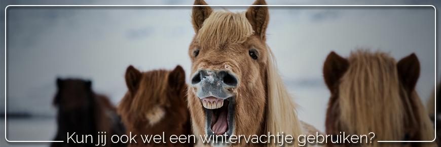 Wintervachtje nodig voor je paard?