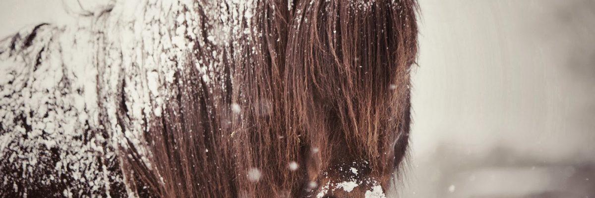 foto-paard-bedekt-met-een-laag-sneeuw-hd-winter-wallpaper