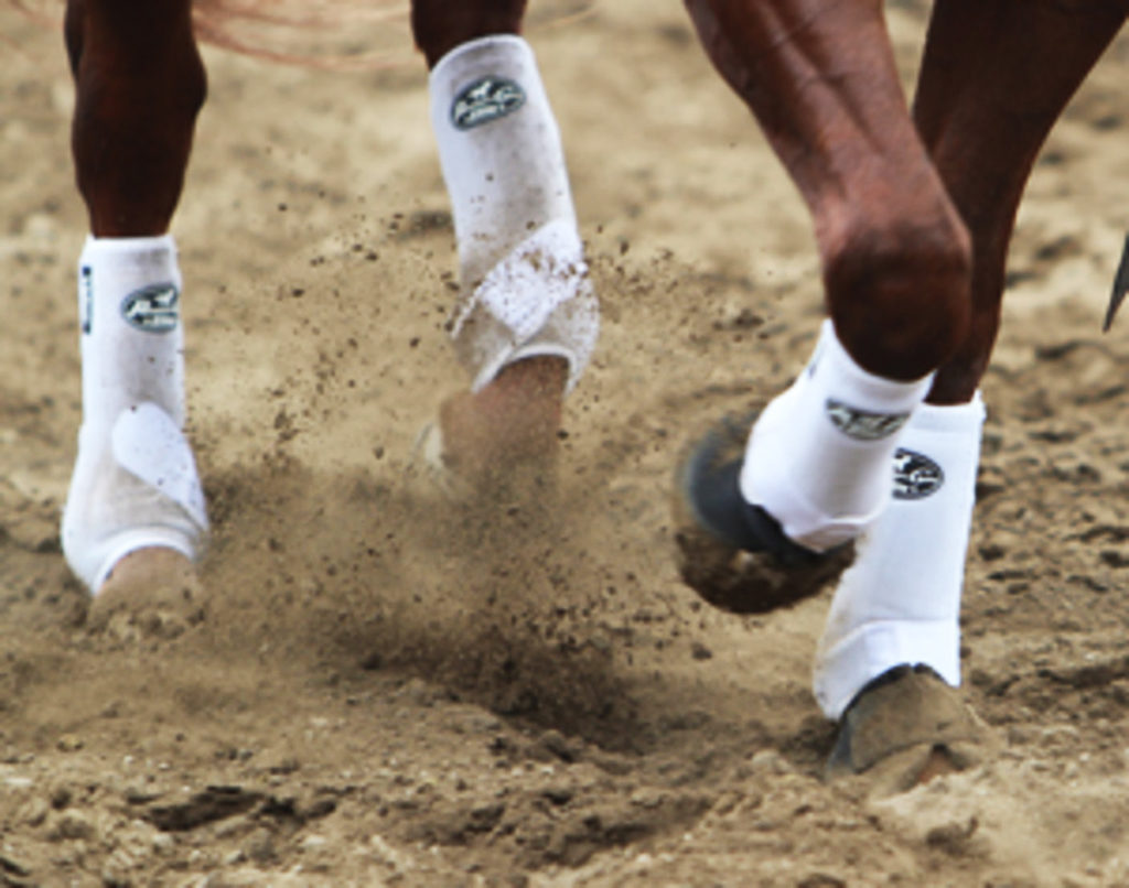 beste beenbescherming voor je paard