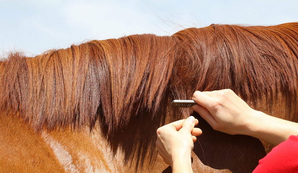 hoe toiletteer je een paard