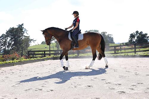 paard beweging geven