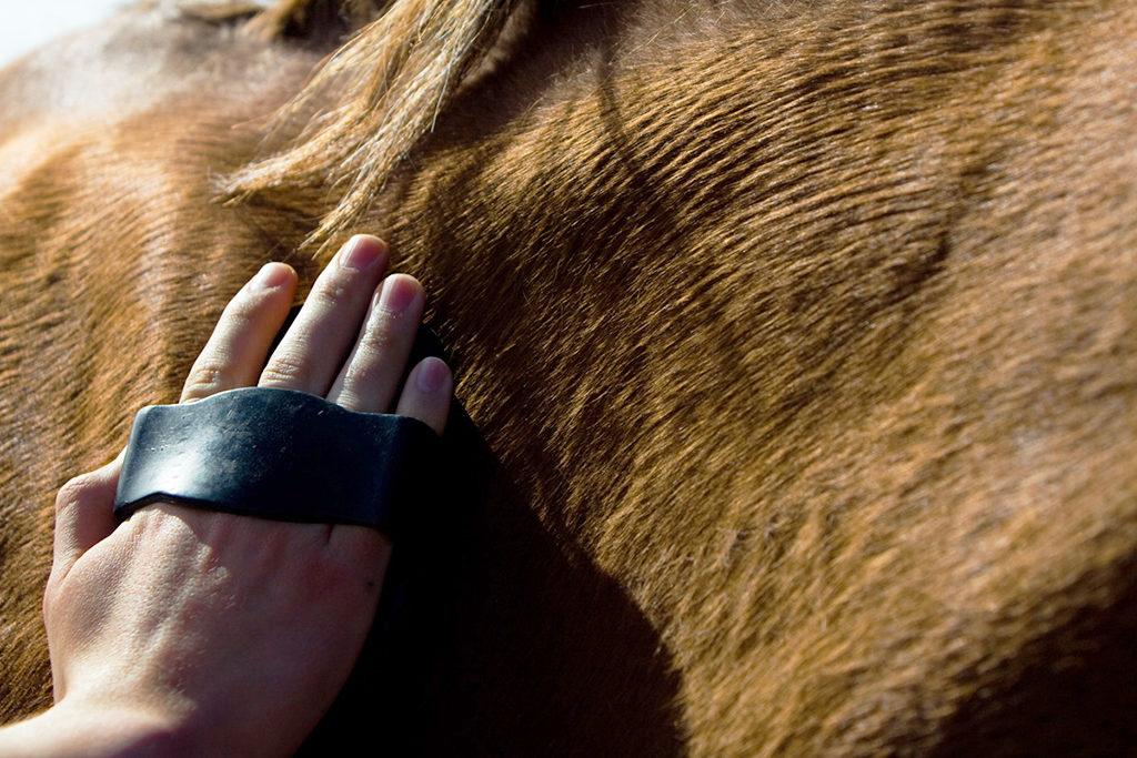 paard verhaart
