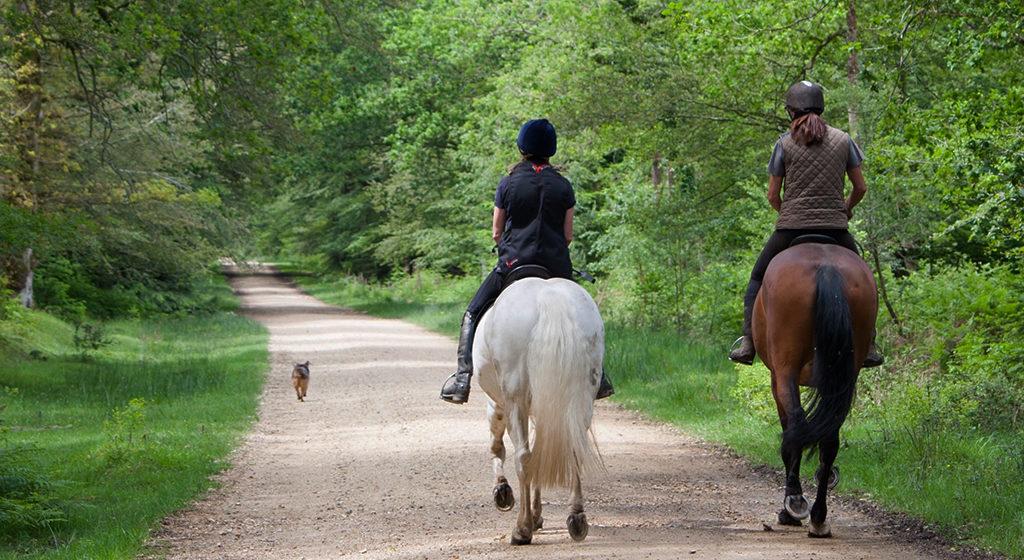 trainingsschema voor je paard