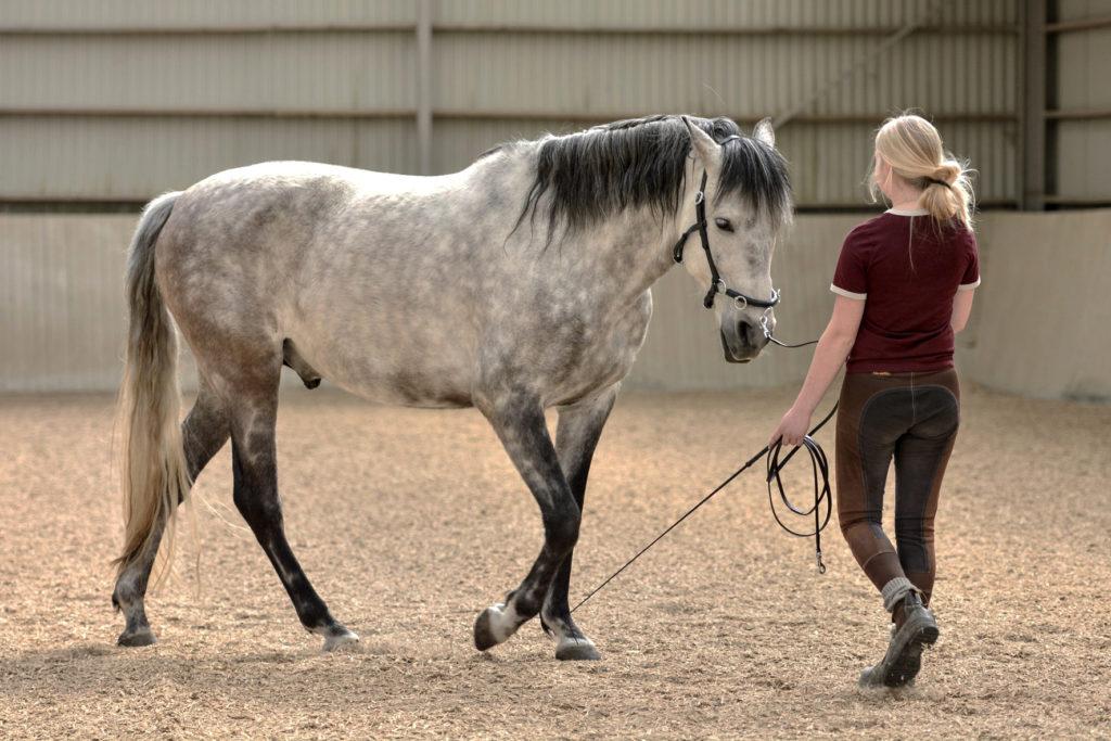 grondwerken met je paard