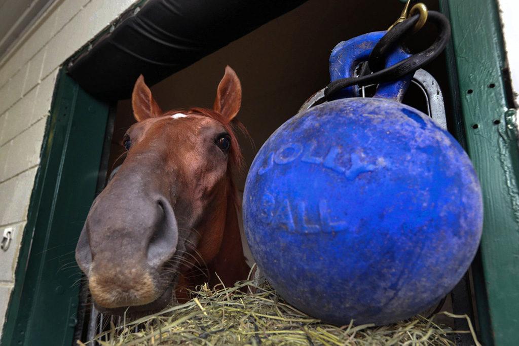 paard verveelt zich op stal