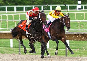 snelste paard
